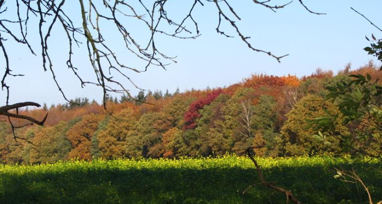 Montferlandschap bij Beek in primaire kleuren, blauwe lucht, rode herfstkleuren en geel koolzaad