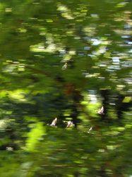 vliegende eenden 2