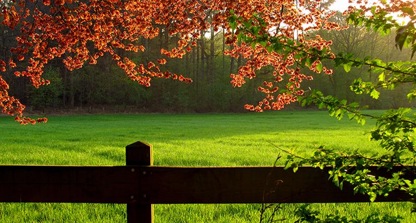 Groen, groener, groenst – blog – 842 x 451 px